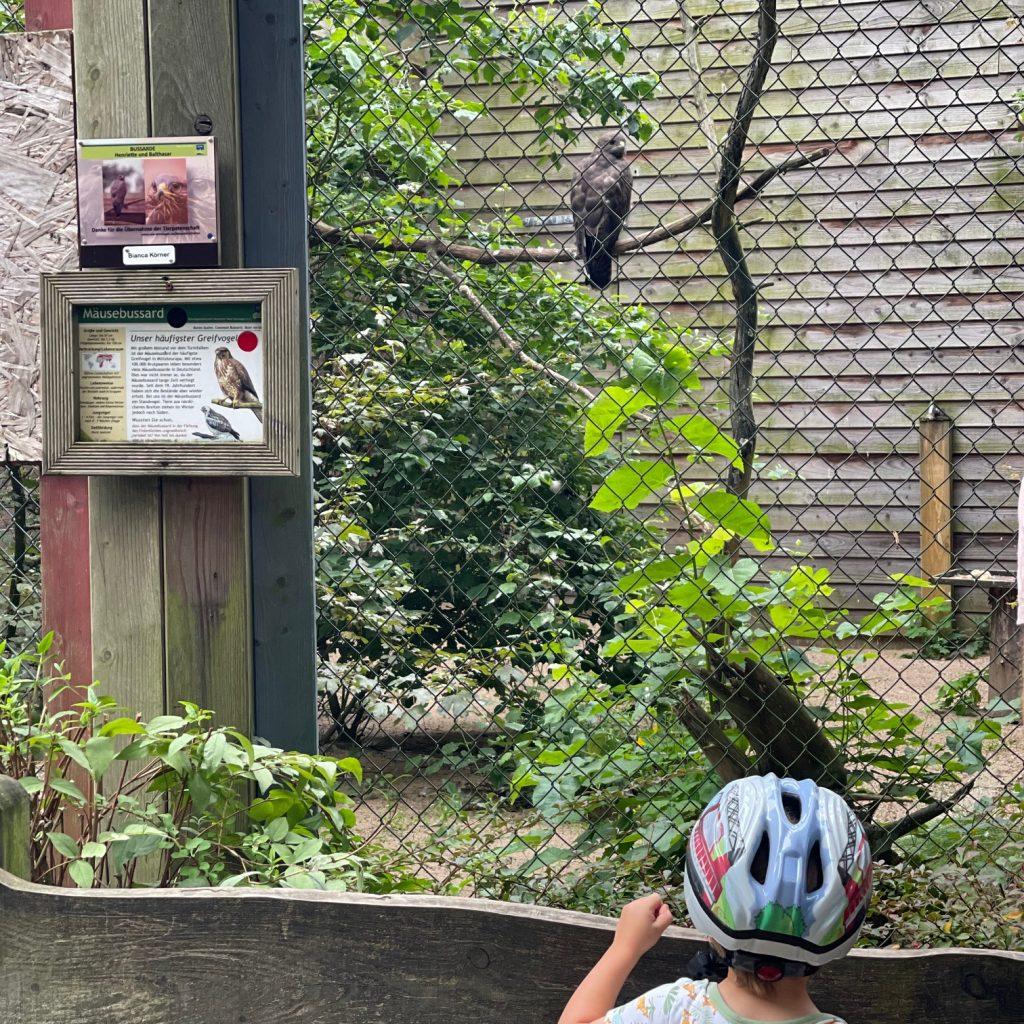 Ein Junge beobachtet einen Wildvogel